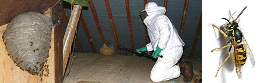 Как избавиться от шершней под крышей в домашних условиях 913